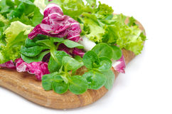Different kinds of fresh salad Stock Images