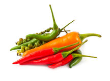Different kinds of hot pepper Stock Image