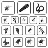 Different kinds of insects black icons in set collection for design. Insect arthropod vector isometric symbol stock web. Different kinds of insects black icons Royalty Free Stock Photos
