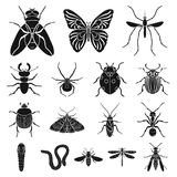 Different kinds of insects black icons in set collection for design. Insect arthropod vector symbol stock web. Different kinds of insects black icons in set Stock Photo