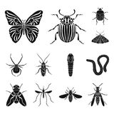 Different kinds of insects black icons in set collection for design. Insect arthropod vector symbol stock web Royalty Free Stock Images