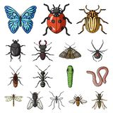 Different kinds of insects cartoon icons in set collection for design. Insect arthropod vector symbol stock web. Different kinds of insects cartoon icons in set Stock Image