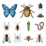 Different kinds of insects cartoon icons in set collection for design. Insect arthropod vector symbol stock web Stock Photography