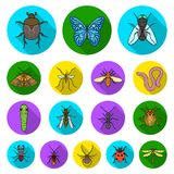 Different kinds of insects flat icons in set collection for design. Insect arthropod vector symbol stock web. Different kinds of insects flat icons in set Royalty Free Stock Images