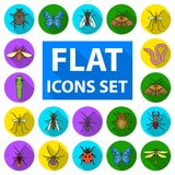 Different kinds of insects flat icons in set collection for design. Insect arthropod vector symbol stock web. Different kinds of insects flat icons in set Stock Images
