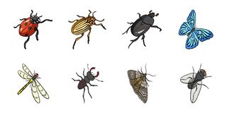 Different kinds of insects icons in set collection for design. Insect arthropod isometric vector symbol stock web. Different kinds of insects icons in set Stock Photography