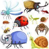 Different kinds of insects royalty free illustration