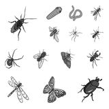 Different kinds of insects monochrome icons in set collection for design. Insect arthropod vector isometric symbol stock. Illustration Stock Photography