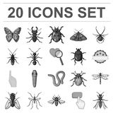 Different kinds of insects monochrome icons in set collection for design. Insect arthropod vector symbol stock web. Different kinds of insects monochrome icons Royalty Free Stock Photos