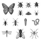 Different kinds of insects monochrome icons in set collection for design. Insect arthropod vector symbol stock web. Different kinds of insects monochrome icons Royalty Free Stock Photo