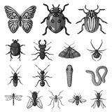 Different kinds of insects monochrome icons in set  Royalty Free Stock Photo