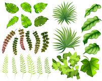 Different kinds of leaves Stock Images