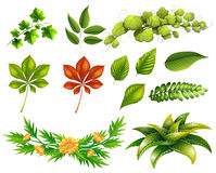 Different kinds of leaves Royalty Free Stock Images