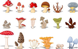 Different kinds of mushrooms Royalty Free Stock Photography