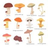 Different kinds of mushrooms. Set mushroom vector illustration Royalty Free Stock Photo