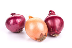 Different kinds of onions Royalty Free Stock Image