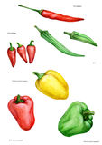 Different kinds of pepper, vegetable, nutrition, food, relish, colored. Different types of pepper, sweet, spicy, watercolor Stock Photo