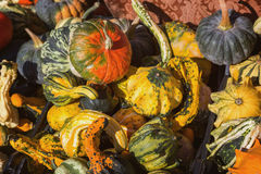 Different kinds of pumpkins in sunshine; Offer at weekly market Stock Image
