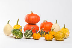 Different kinds of pumpkins. white background Stock Image