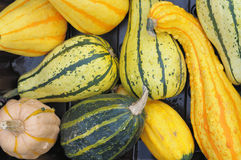 Different kinds of small pumpkins Stock Photos