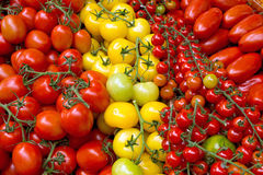 Different kinds of tomatoes Royalty Free Stock Images