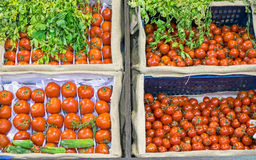 Different kinds of tomatoes Royalty Free Stock Image