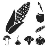 Different kinds of vegetables black icons in set collection for design. Vegetables and vitamins vector symbol stock web. Different kinds of vegetables black Royalty Free Stock Images