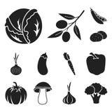 Different kinds of vegetables black icons in set collection for design. Vegetables and vitamins vector symbol stock web. Different kinds of vegetables black Stock Image