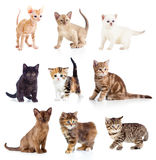 Different kittens collection. Isolate on white Royalty Free Stock Image