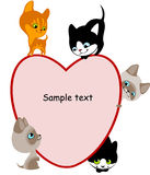 Different kittens. Place for your text hear 2. Royalty Free Stock Images