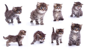 Different kitty Royalty Free Stock Photo