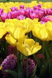 Different layers of flowers. Yellow and purple flowers Stock Photo
