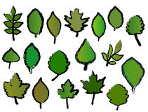 Different leafs vector illustration
