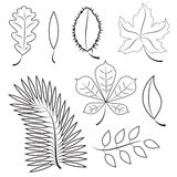Different leaves. contour plot Stock Image