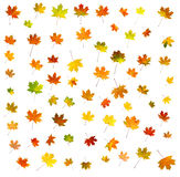 75 different leaves Royalty Free Stock Photography