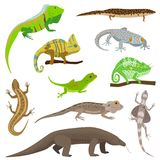 Different lizard reptile animals  on white vector illustration. Royalty Free Stock Photo