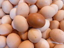 Different: Lots of White Eggs with One Brown Egg Royalty Free Stock Photos