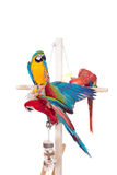 Different macaws on white Stock Image
