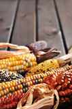 Different maize-cobs Stock Photos