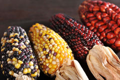 Different maize-cobs Royalty Free Stock Image
