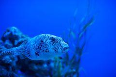 Different marine animals Royalty Free Stock Image