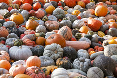 Different maxima and pepo cucurbita pumpkin pumpkins from autumn Stock Images