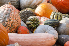 Different maxima and pepo cucurbita pumpkin pumpkins from autumn Stock Photos