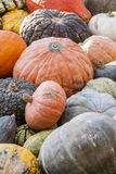 Different maxima and pepo cucurbita pumpkin pumpkins from autumn Stock Photography