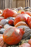 Different maxima and pepo cucurbita pumpkin pumpkins from autumn Royalty Free Stock Photography
