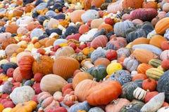 Different maxima and pepo cucurbita pumpkin pumpkins from autumn Stock Photo