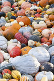 Different maxima and pepo cucurbita pumpkin pumpkins from autumn Stock Image