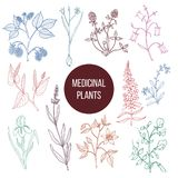 Different medicinal plants collection. Hand drawn vector illustration Stock Photos