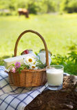 Different milk products: cheese, cream, milk, oil Royalty Free Stock Photo