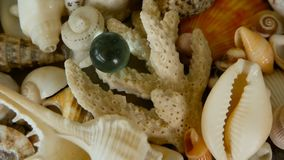 Different mixed colorful seashells as background. Various corals, marine mollusk and scallop shells. Close up lots of different mixed colorful seashells as stock video footage